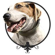 Besuchshunde - Leinenlos Hundetraining in München