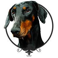 Erfolgstraining - Leinenlos Hundetraining in München
