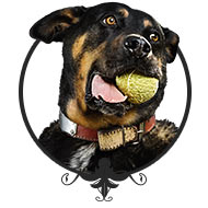 Hundebetreuung - Leinenlos Hundetraining in München