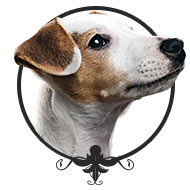 Dogaid - Leinenlos Hundetraining in München