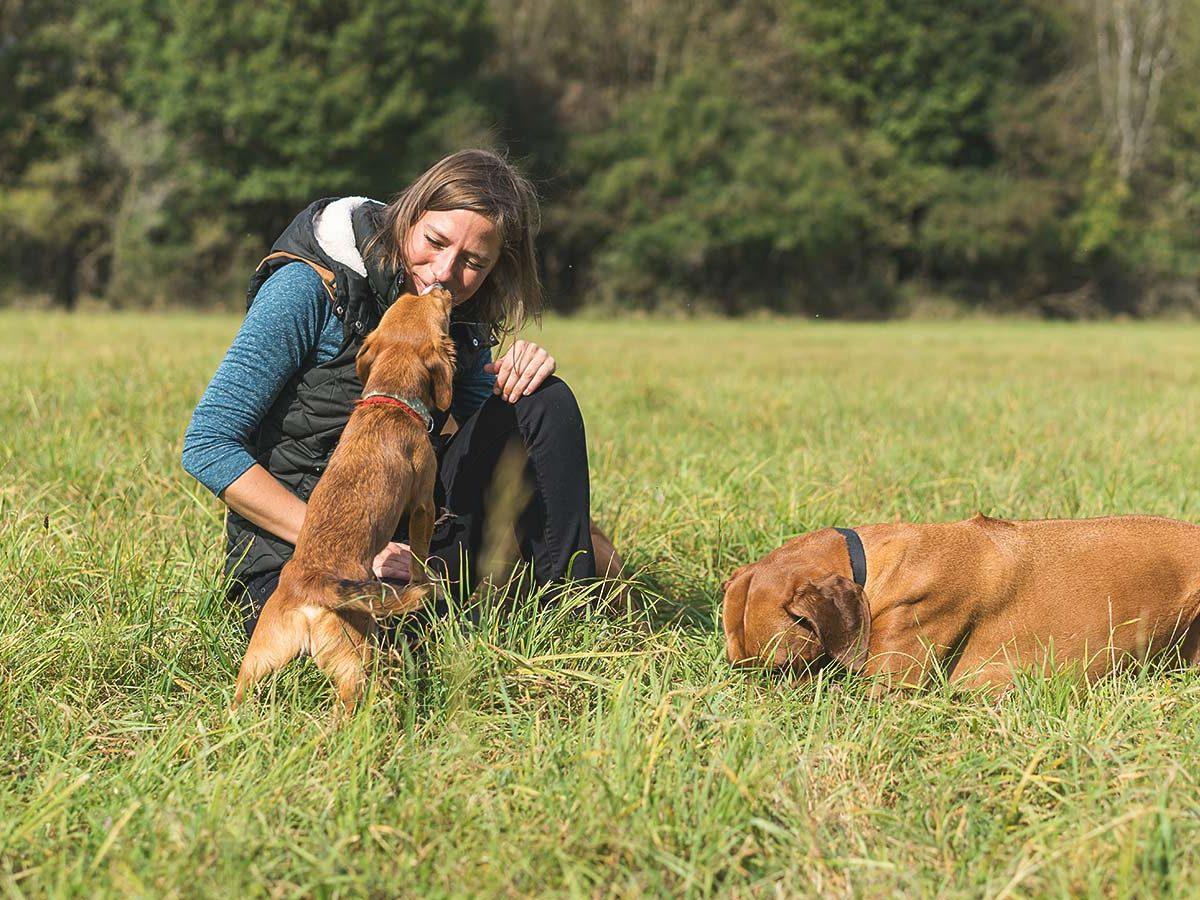 Körpersprache bei Hundetraining Leinenlos in München