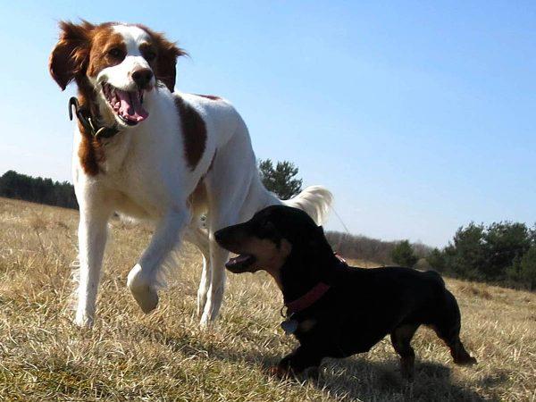 Leinenlos Hundebetreuung - Freundschaft schliessen