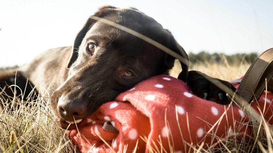 Mittagspause auf der Heide - Hundetraining Leinenlos in München