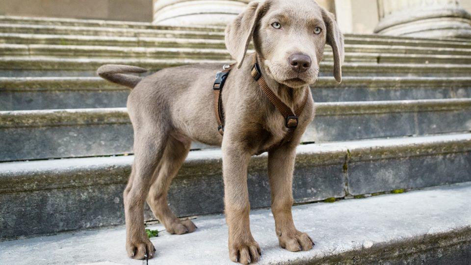 Problemhund - Training von klein auf - Hundetraining Leinenlos in München