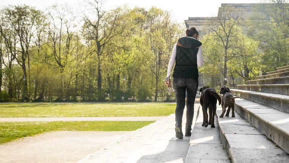 Problemhund - Training in jungen Jahren - Hundetraining Leinenlos in München