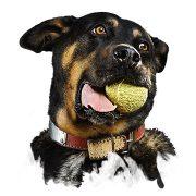 Hundetraining und Konditionierung