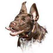 Galerie und Eindrück des Leinenlos Hundetraining
