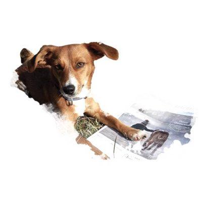 Julia Höhn´s Buchtipps zum Hundetraining Leinenlos Programm
