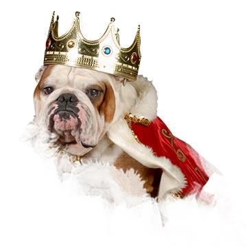 Hundetraining Leinenlos Blog mit aktuellen News aus der Welt der Hunde