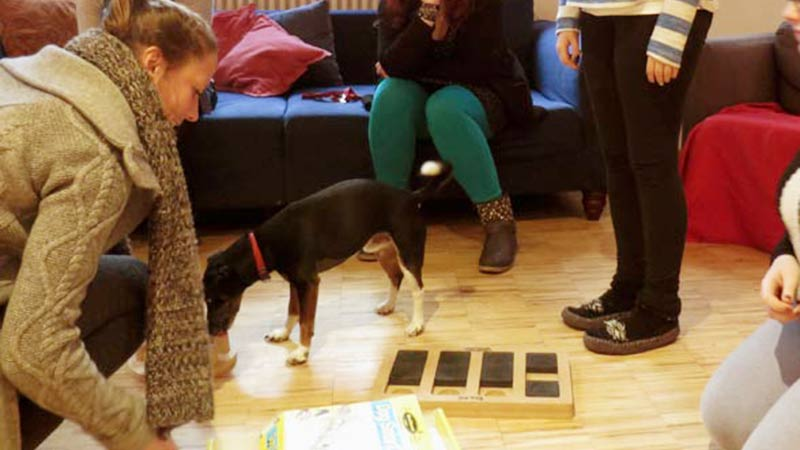 Leinenlos Hundebetreuung - Besuchshunde Leo