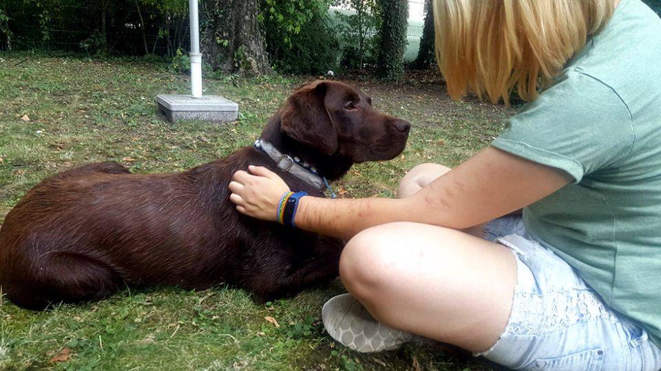 Leinenlos Hundetraining - Besuchshunde bei Borderline-Patienten