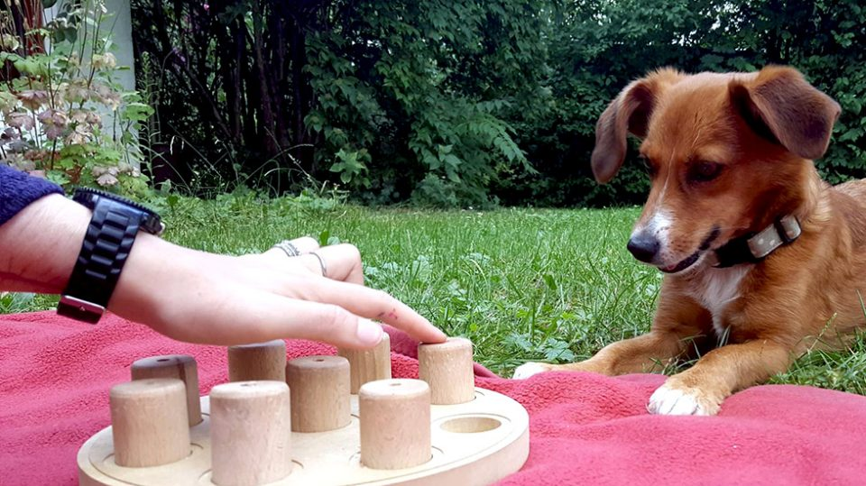 Leinenlos Hundetraining - Einzelbesuche
