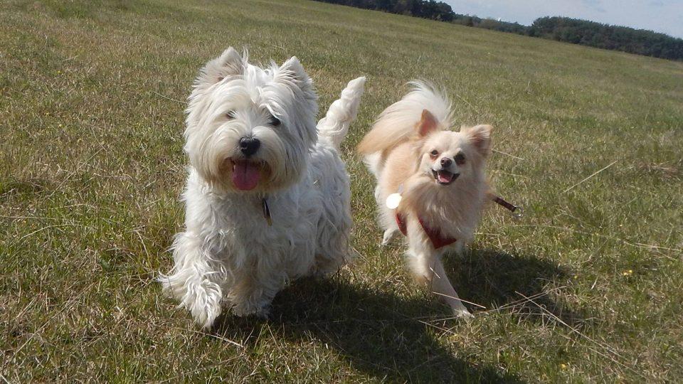 Hundetraining auf der Heide - Hundetraining Leinenlos in München