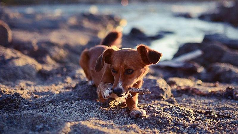 Hundetraining und Betreuung Leinenlos am Strand