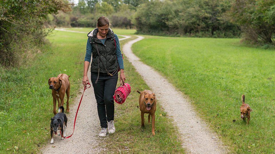 Hundebetreuung und Spaziergang