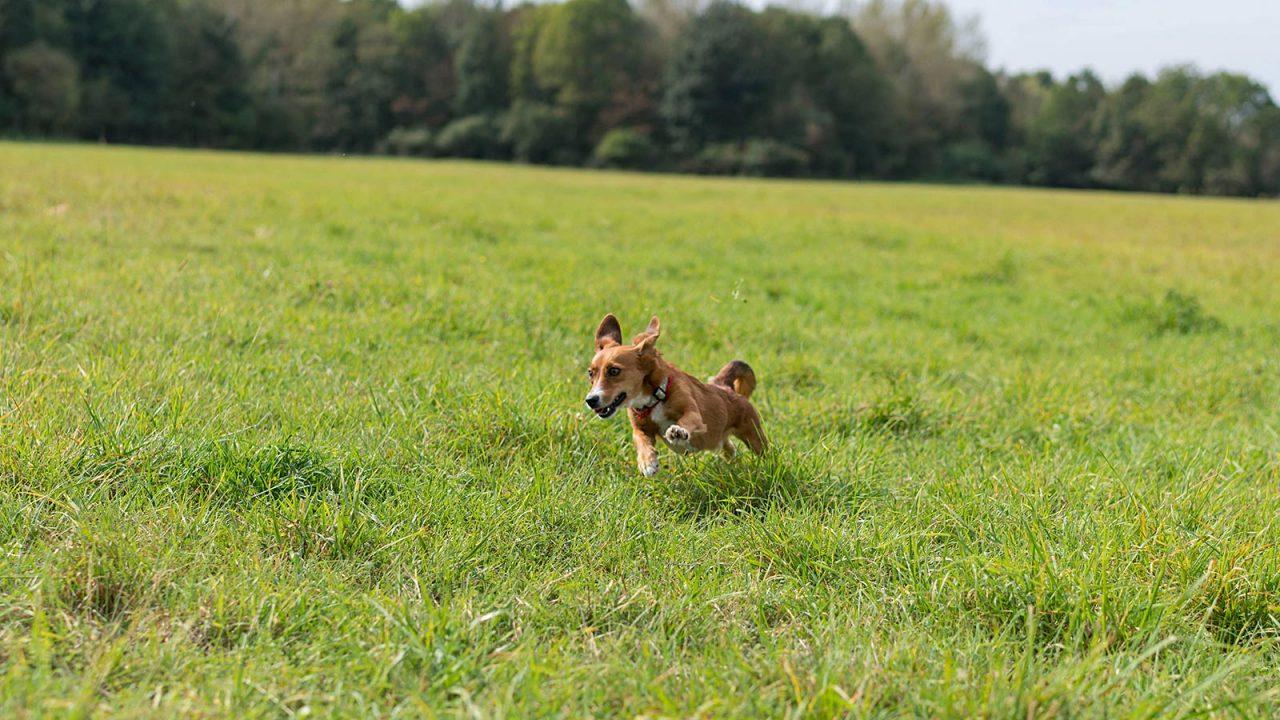 Hundebetreuung Julia Höhn Hundetraining Leinenlos