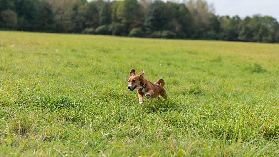 Hundebetreuung und Auslauf
