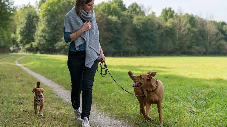 Hundetrainerin Julia Höhn - Leinenlos - Ein Erfolgsprojekt