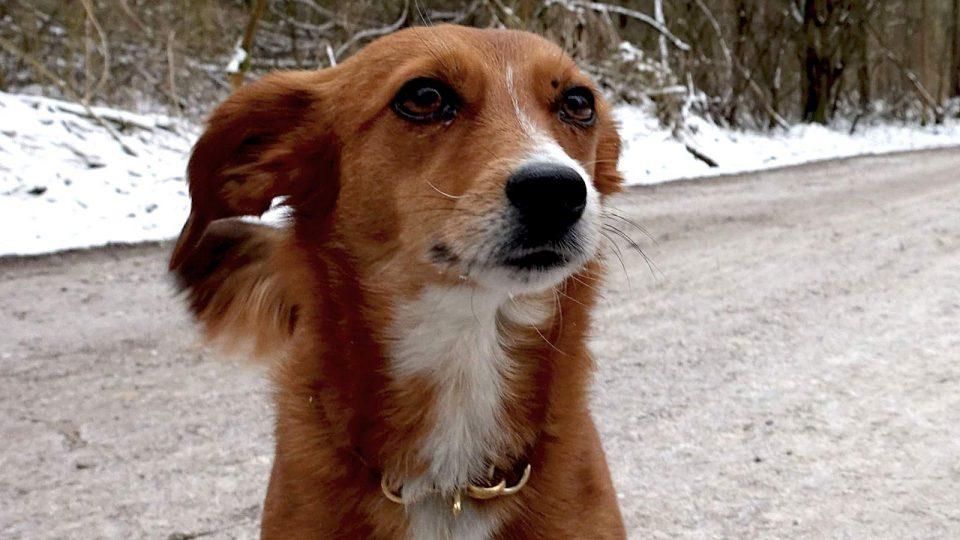 Hundetraining Problemhund - Angst und Aggressionen therapieren
