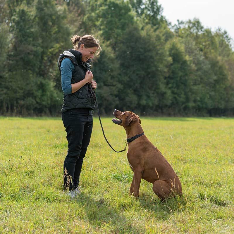 Alltagstraining bei Hundetraining Leinenlos in München
